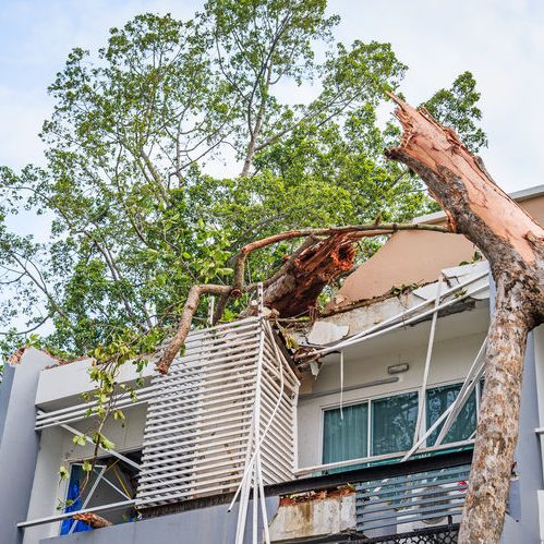 A Fallen Tree On a Building.